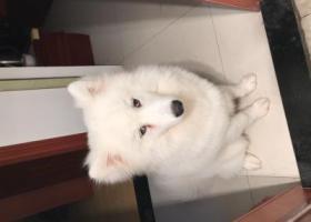 寻狗启示,捡到我家狗狗的能还给我,我必当重谢,如果实在不愿意归还也希望能好好对它,它叫丸子,他很听话也很调皮,它是一只非常可爱的宠物狗狗,希望它早日回家,不要变成流浪狗。
