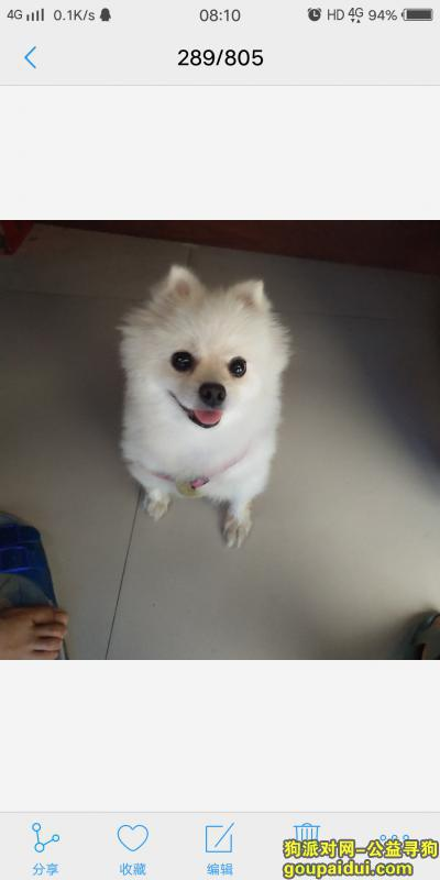 聊城丢狗,寻找爱狗,我们家博美犬走丢了,它是一只非常可爱的宠物狗狗,希望它早日回家,不要变成流浪狗。