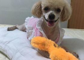 寻狗启示,寻找妞妞狗狗!!!!,它是一只非常可爱的宠物狗狗,希望它早日回家,不要变成流浪狗。