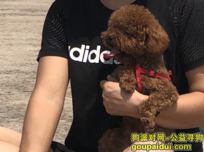 蚌埠寻狗,家里二宝丢失,很着急,望捡到宝贝的好心人联系我,15256034633,它是一只非常可爱的宠物狗狗,希望它早日回家,不要变成流浪狗。
