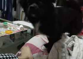 家里养的小笨狗于津南区北闸口镇乾隆学府处走失,很着急