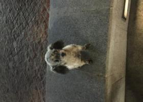寻狗启示,10月7日晚上在迎江区宜城路菱南公寓附近丢失的狗狗,它是一只非常可爱的宠物狗狗,希望它早日回家,不要变成流浪狗。
