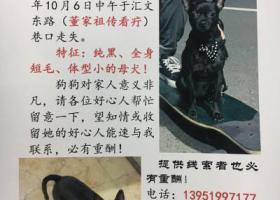 寻狗启示,江苏盐城10.6 号走失,它是一只非常可爱的宠物狗狗,希望它早日回家,不要变成流浪狗。