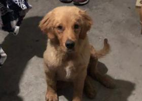 寻狗启示,寻找毛孩子的主人!!!,它是一只非常可爱的宠物狗狗,希望它早日回家,不要变成流浪狗。