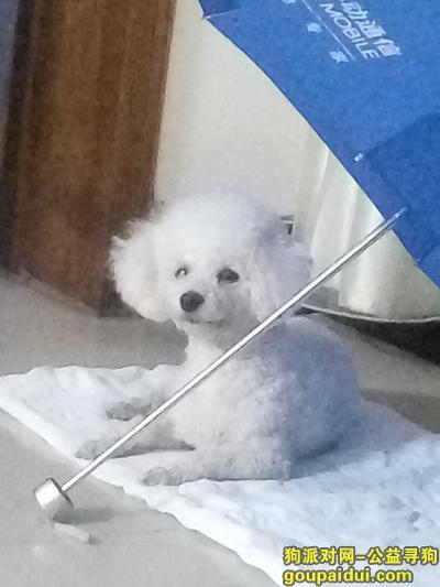 漯河寻狗启示,2018.18.8晚上在舞阳县城受惊吓逃跑丢失,现金酬谢,它是一只非常可爱的宠物狗狗,希望它早日回家,不要变成流浪狗。