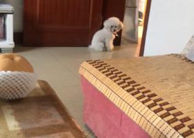 寻狗启示,10.8日晚于湘潭路走失 狗狗身体不好而且胆小 急寻!,它是一只非常可爱的宠物狗狗,希望它早日回家,不要变成流浪狗。