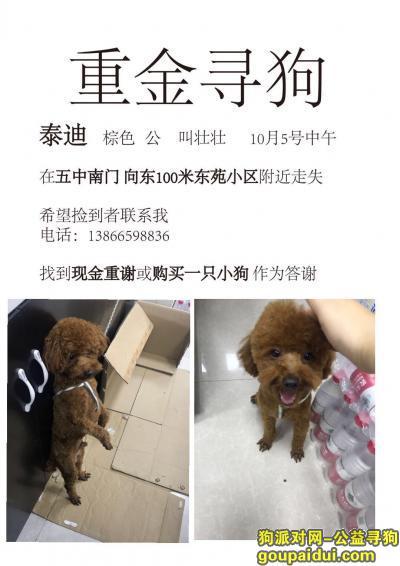 【宿州找狗】,宿州砀山县东苑小区酬谢五千元寻找泰迪,它是一只非常可爱的宠物狗狗,希望它早日回家,不要变成流浪狗。