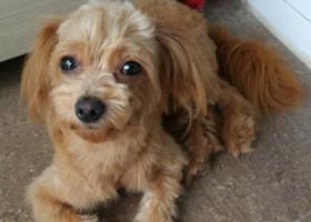 寻狗启示,闹闹丢失20天,我们等你回家,它是一只非常可爱的宠物狗狗,希望它早日回家,不要变成流浪狗。