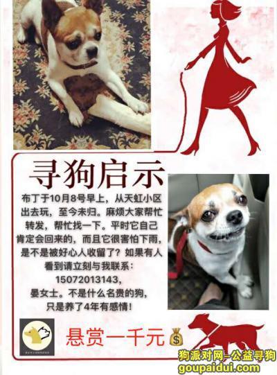 黄石找狗,一只吉娃娃串串,有一点胖,黄白花的。重金寻狗!,它是一只非常可爱的宠物狗狗,希望它早日回家,不要变成流浪狗。