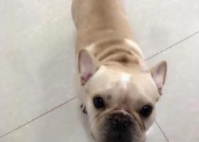 寻狗启示,寻找包子 10月11日在开元路和神州路附近丢失,它是一只非常可爱的宠物狗狗,希望它早日回家,不要变成流浪狗。