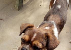 寻狗启示,可怜的小花狗渴望被领养,它是一只非常可爱的宠物狗狗,希望它早日回家,不要变成流浪狗。