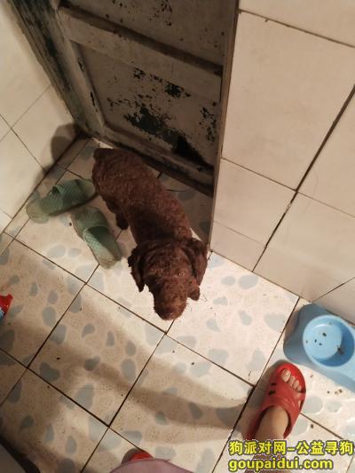【西安找狗】,爱犬卷毛丢失,如有看到的请联系我,谢谢!,它是一只非常可爱的宠物狗狗,希望它早日回家,不要变成流浪狗。