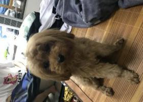 寻狗启示,10月12日海珠区东晓南新都荟附近走丢  愿意5000元寻回,它是一只非常可爱的宠物狗狗,希望它早日回家,不要变成流浪狗。