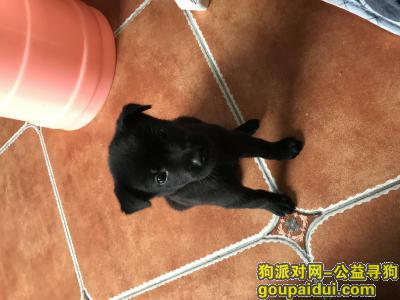 寻狗启示,2000寻走丢3月大小黑狗石坪桥望京有人醉走丢,它是一只非常可爱的宠物狗狗,希望它早日回家,不要变成流浪狗。