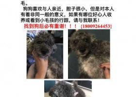 寻狗启示,西安市朱宏路重金寻爱犬黑灰色泰迪 好心人看到速联系我,它是一只非常可爱的宠物狗狗,希望它早日回家,不要变成流浪狗。