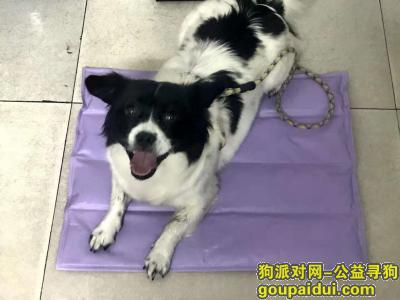 宜春寻狗启示,宜春袁州区翡翠城酬谢一千元寻找狗狗,它是一只非常可爱的宠物狗狗,希望它早日回家,不要变成流浪狗。