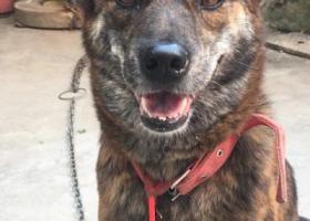 寻狗启示,请帮我把它找回来它是一条土狗,它是一只非常可爱的宠物狗狗,希望它早日回家,不要变成流浪狗。