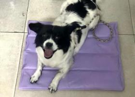 寻狗启示,袁州区翡翠城酬谢一千元寻找狗狗,它是一只非常可爱的宠物狗狗,希望它早日回家,不要变成流浪狗。