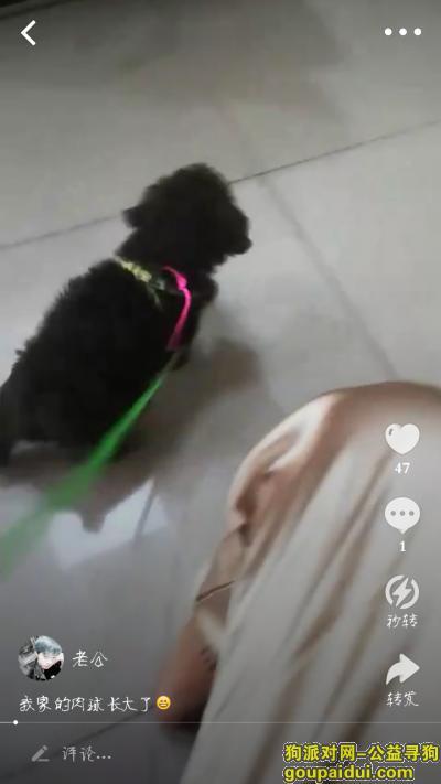 辽阳寻狗启示,帮我找狗狗谢谢。,,,,它是一只非常可爱的宠物狗狗,希望它早日回家,不要变成流浪狗。