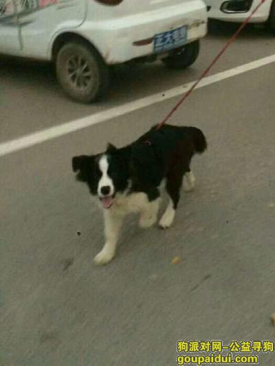 菏泽寻狗启示,狗叫毛球希望能找到啊,它是一只非常可爱的宠物狗狗,希望它早日回家,不要变成流浪狗。