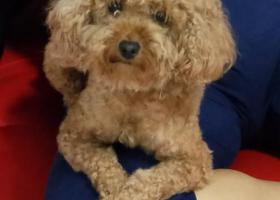 寻狗启示,寻狗,走丢于北辰区九园公路青水源766公交站附近,它是一只非常可爱的宠物狗狗,希望它早日回家,不要变成流浪狗。