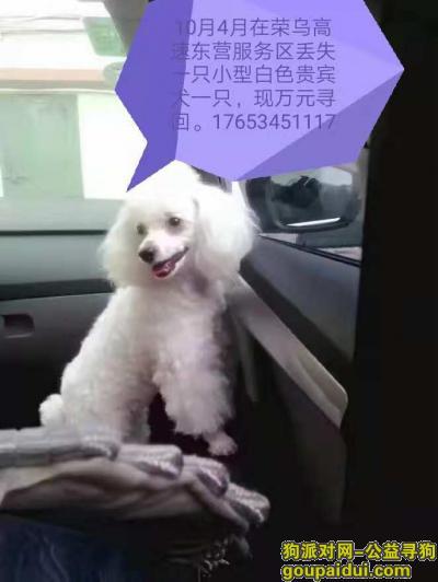 寻狗启示,018年10月4日上午在荣乌高速东营服务区丢失一只白色小型贵宾犬,它是一只非常可爱的宠物狗狗,希望它早日回家,不要变成流浪狗。
