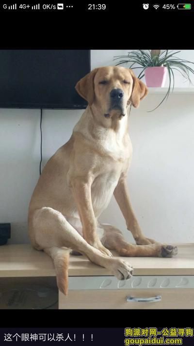 寻狗启示,寻找爱犬哈哈,浦东人民塘路附近走丢,它是一只非常可爱的宠物狗狗,希望它早日回家,不要变成流浪狗。