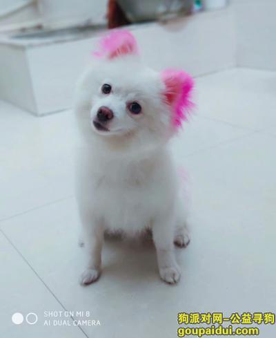 寻狗启示,在偃师山化镇丢失一只爱犬,它是一只非常可爱的宠物狗狗,希望它早日回家,不要变成流浪狗。
