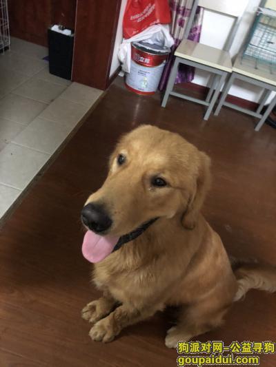 寻狗启示,万元寻狗,米修,我们都很着急!,它是一只非常可爱的宠物狗狗,希望它早日回家,不要变成流浪狗。