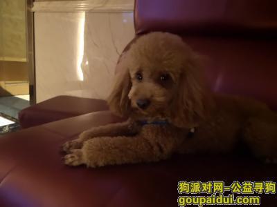 萍乡寻狗启示,萍乡市上栗县胜利路天盛大药房附近走失一条泰迪,它是一只非常可爱的宠物狗狗,希望它早日回家,不要变成流浪狗。