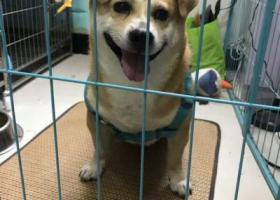 寻狗启示,爱犬在南京鼓楼区古平岗37号附近丢失,它是一只非常可爱的宠物狗狗,希望它早日回家,不要变成流浪狗。