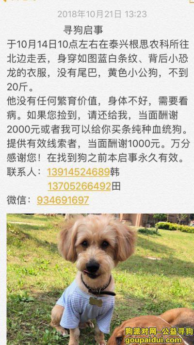 泰州找狗,泰州市泰兴市根新路农科所酬谢2000元寻找狗狗,它是一只非常可爱的宠物狗狗,希望它早日回家,不要变成流浪狗。