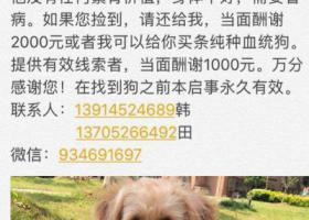 寻狗启示,泰州市泰兴市根新路农科所酬谢2000元寻找狗狗,它是一只非常可爱的宠物狗狗,希望它早日回家,不要变成流浪狗。