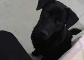 寻狗启示,北下朱走丢一只全黑狗,它是一只非常可爱的宠物狗狗,希望它早日回家,不要变成流浪狗。