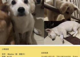 寻狗启示,南安市水头镇蟠龙寻犬,它是一只非常可爱的宠物狗狗,希望它早日回家,不要变成流浪狗。