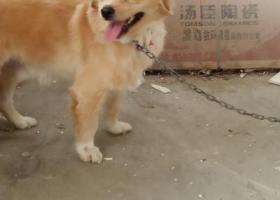寻狗启示,寻找黄色中华田园犬,在健威家居广场附近走失。,它是一只非常可爱的宠物狗狗,希望它早日回家,不要变成流浪狗。