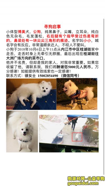,寻找丢失的博美犬,酬谢5000,它是一只非常可爱的宠物狗狗,希望它早日回家,不要变成流浪狗。