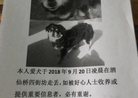 寻狗启示,寻狗启示爱犬走失有只下落者酬谢2000元,它是一只非常可爱的宠物狗狗,希望它早日回家,不要变成流浪狗。