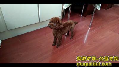 铁岭找狗,寻找泰迪犬,酬谢500元,它是一只非常可爱的宠物狗狗,希望它早日回家,不要变成流浪狗。