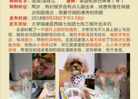 寻狗启示,重庆沙坪坝大学城康居西城七组团走失京巴泰迪串串狗一只,捡到归还酬谢3000元,提供线索找到狗狗酬谢500元,它是一只非常可爱的宠物狗狗,希望它早日回家,不要变成流浪狗。