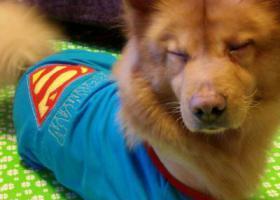 寻狗启示,北京孙家坡站湿地公园附近走丢,它是一只非常可爱的宠物狗狗,希望它早日回家,不要变成流浪狗。