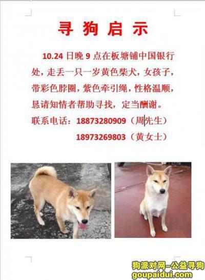 湘潭找狗,寻狗启示 湘潭板塘铺中国银行附近 找到必有重谢,它是一只非常可爱的宠物狗狗,希望它早日回家,不要变成流浪狗。