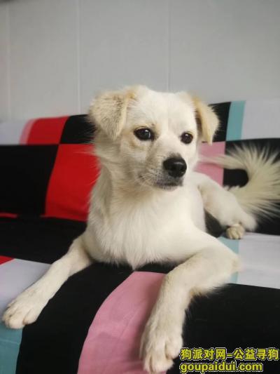 黄冈找狗,狗狗在黄州三台菜场走丢,急寻,它是一只非常可爱的宠物狗狗,希望它早日回家,不要变成流浪狗。