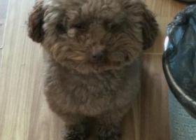 寻狗启示,大家好,我的狗狗名叫豆花,棕灰毛发,2018年11月6号在四川省巴中市清江镇红星梁附近走失,希望好心人看见能及时帮我抓住它并联系我,必有重谢,谢谢大家,它是一只非常可爱的宠物狗狗,希望它早日回家,不要变成流浪狗。
