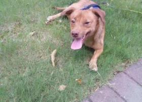 寻狗启示,常州市钟楼区西新桥二村寻找狗狗,它是一只非常可爱的宠物狗狗,希望它早日回家,不要变成流浪狗。