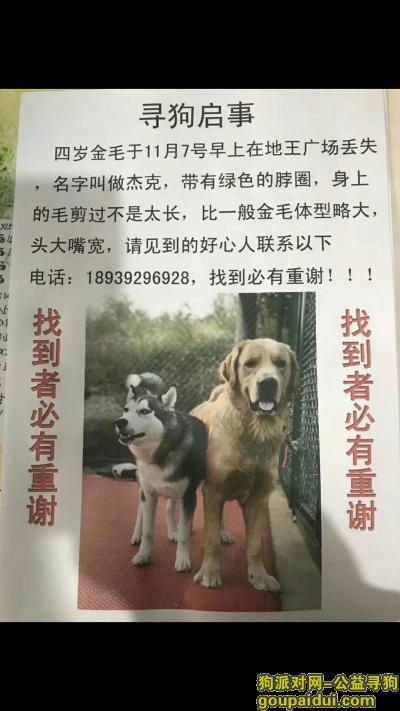 鹤壁找狗,爱心人士帮忙找狗 必有重谢,它是一只非常可爱的宠物狗狗,希望它早日回家,不要变成流浪狗。