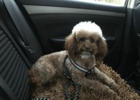寻狗启示,家中爱犬丢失,恳请看到的人联系:13182860625,它是一只非常可爱的宠物狗狗,希望它早日回家,不要变成流浪狗。