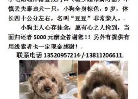 寻狗启示,11.8 日 丢失爱宠泰迪 名字叫豆豆 九岁,它是一只非常可爱的宠物狗狗,希望它早日回家,不要变成流浪狗。