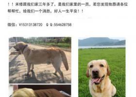 寻狗启示,5000 元寻狗拉布拉多!当面酬谢!,它是一只非常可爱的宠物狗狗,希望它早日回家,不要变成流浪狗。