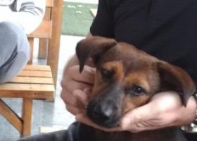 寻狗启示,遗失一条小土狗,地点在江苏昆山,它是一只非常可爱的宠物狗狗,希望它早日回家,不要变成流浪狗。